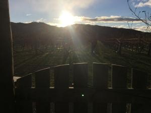 Sun down over Stanley Estate's vineyard